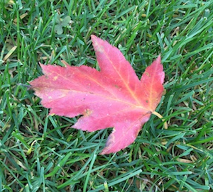 Blattfärbung im Herbst