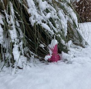 Karl im Schnee